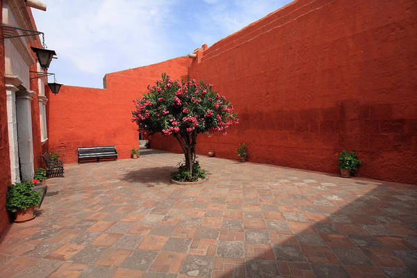 Photograph - Laurel Tree At Santa Catalina Monastery by Aidan Moran