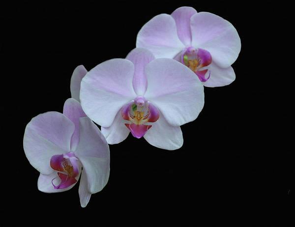 Photograph - Lauritzen Gardens Orchids by Dennis Buckman