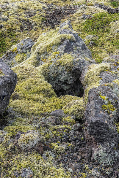 Photograph - Lava Rocks And Moss by Tom Singleton