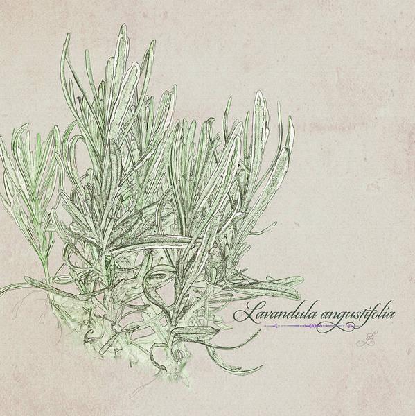 Digital Art - Lavandula Augustiflora by Gina Harrison
