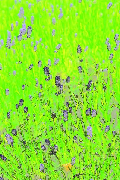 Photograph - Lavender by Jerry Sodorff