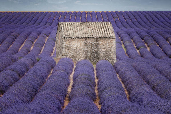 Feld Wall Art - Photograph - Lavendel by Joana Kruse