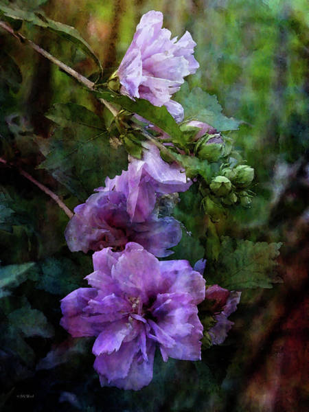 Photograph - Lavender And Pink Rose Of Sharon 3389 Idp_2 by Steven Ward