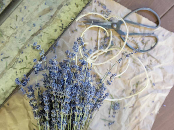 Wall Art - Photograph - Lavender And Twine by Rebecca Cozart
