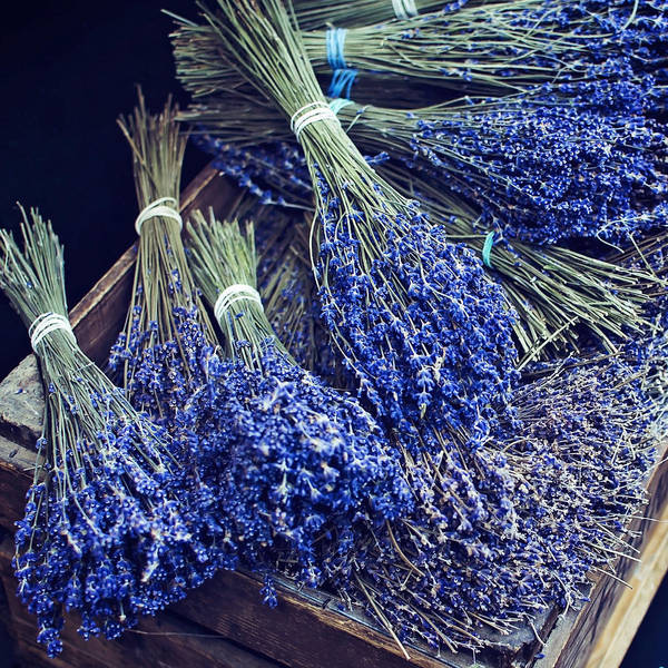 Photograph - Lavender By The Bunch by Heather Applegate