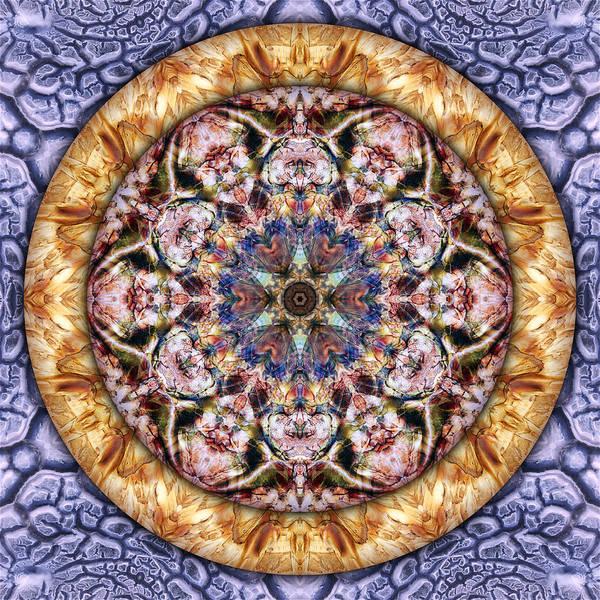 Digital Art - Lavender Dream by Becky Titus