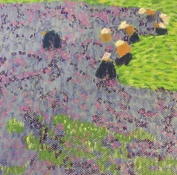 Photograph - Lavender Fields by Cherylene Henderson