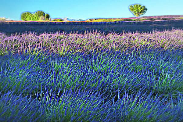 Wall Art - Digital Art - Lavender Fileds by Christian Heeb