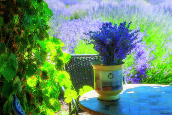 Photograph - Lavender Garden Retreat by Dee Browning