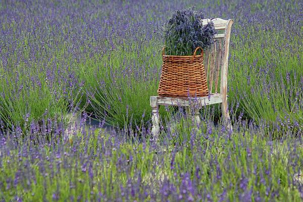 Photograph - Lavender Harvest by Kristen Wilkinson