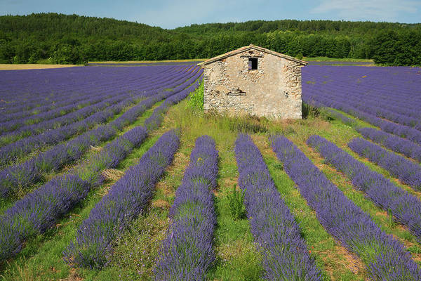 Wall Art - Photograph - Lavender Hut by Christian Heeb