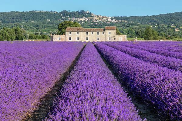 Felder Wall Art - Photograph - lavender in Bonnieux by Joana Kruse