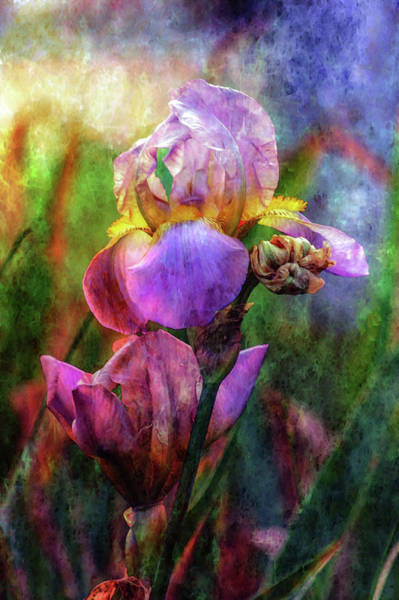 Photograph - Lavender Iris Impression 0056 Idp_2 by Steven Ward