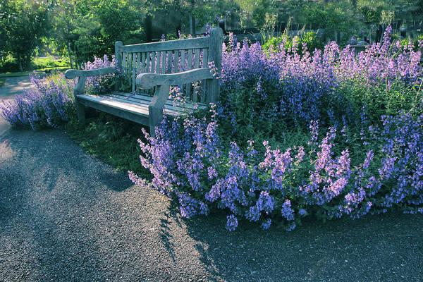 Respite Photograph - Lavender Light by Jessica Jenney