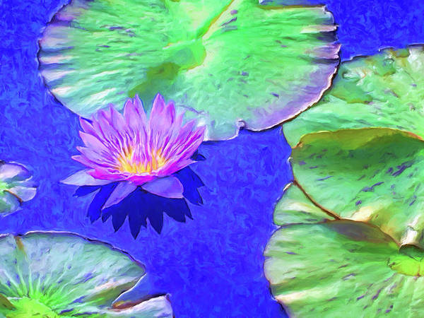 Painting - Lavender Lotus by Dominic Piperata