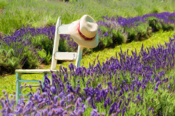 Wall Art - Photograph - Lavender by Michel Emery