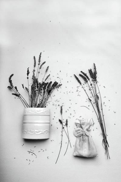 Photograph - Lavender Mood by Randi Grace Nilsberg