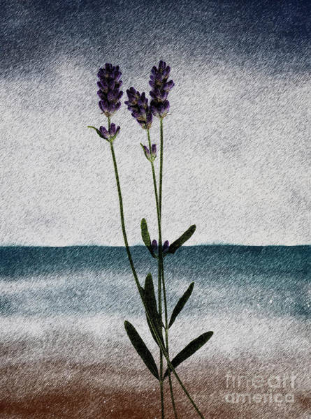 Lavender Ocean Breath Art Print