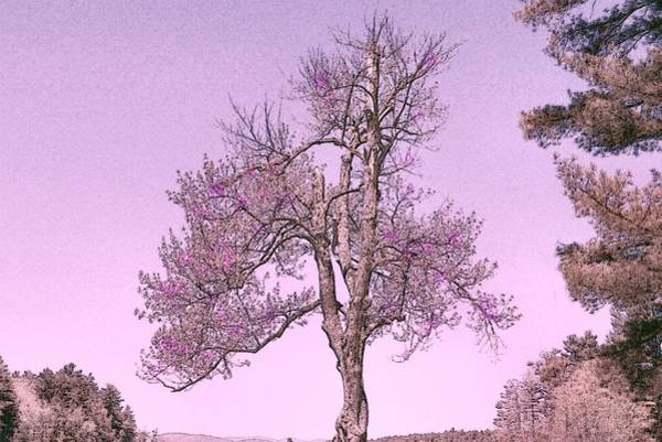 Photograph - Lavender by Rose Guay