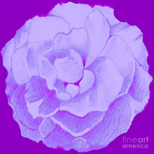 Digital Art - Lavender Rose On Lilac by Helena Tiainen
