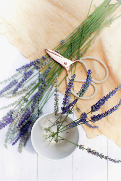 Wall Art - Photograph - Lavender Still Life 3 by Rebecca Cozart