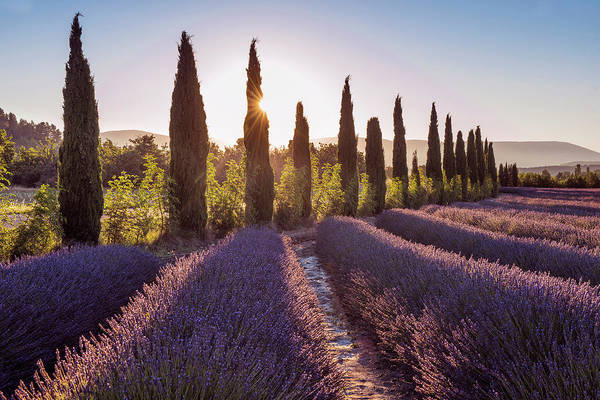 Wall Art - Photograph - Lavender Sunrise by Christian Heeb