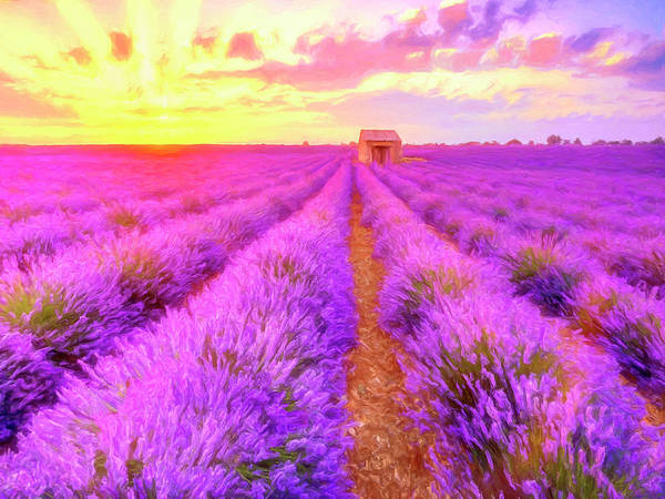 Painting - Lavender Sunrise by Dominic Piperata