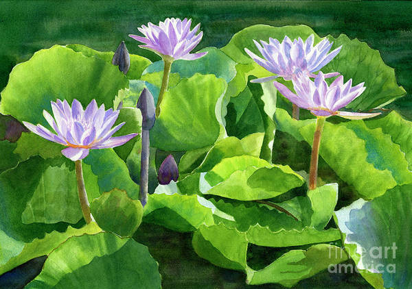 Wall Art - Painting - Lavender Waterlilies With Dark Background by Sharon Freeman