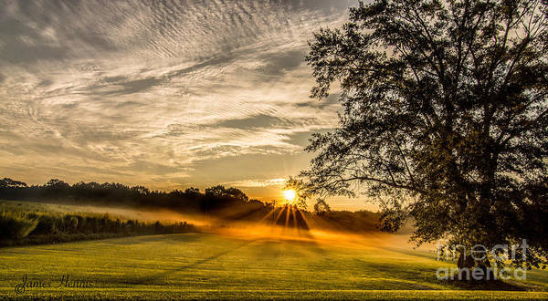 Photograph - Lawn Sunrise by James Hennis