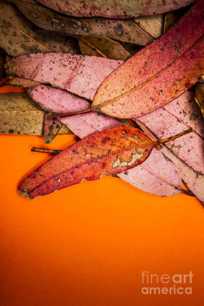 Overlay Photograph - Layers Of Autumn by Jorgo Photography - Wall Art Gallery