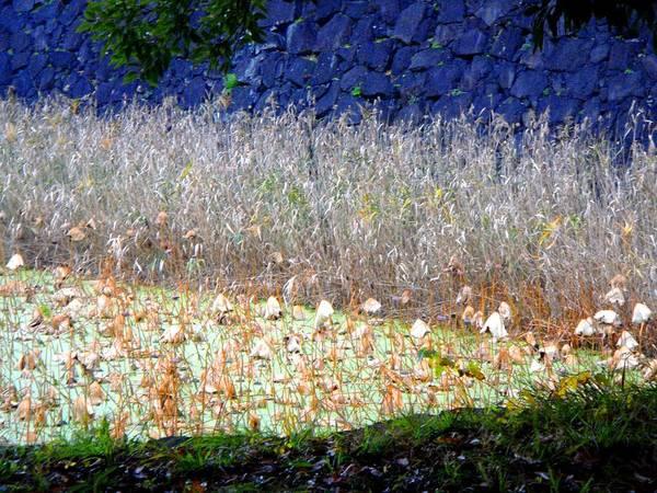 Photograph - Layers by Roberto Alamino