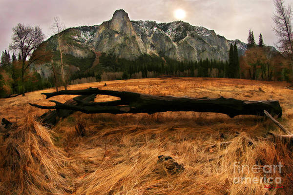 Photograph - Laying Black Yosemite Tree by Blake Richards
