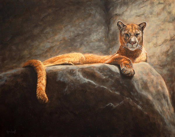 Painting - Laying Cougar by Linda Merchant