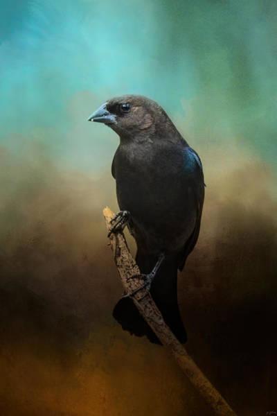 Cowbird Photograph - Lazy Bird by Jai Johnson