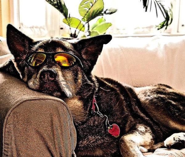 Photograph - Lazy Dog by Jim DeLillo