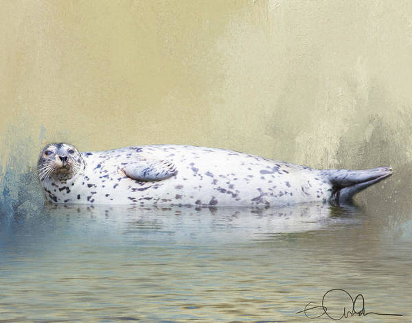 Digital Art - Lazy Harbor Seal by Gloria Anderson