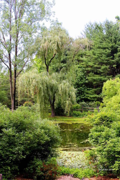 Weeping Willow Wall Art - Photograph - Lazy Pond by Deborah  Crew-Johnson