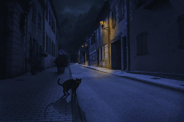 Dark Wall Art - Photograph - Le Chat Noir by Omar Brunt