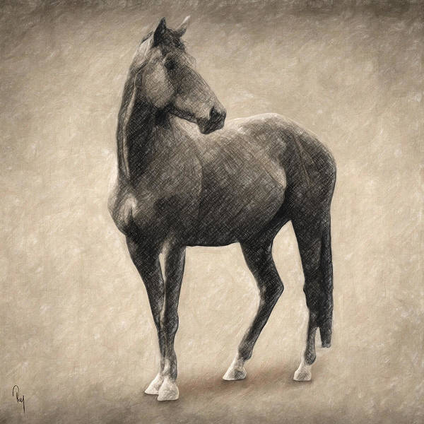 Mixed Colors Drawing - Le Cheval by Zapista Zapista