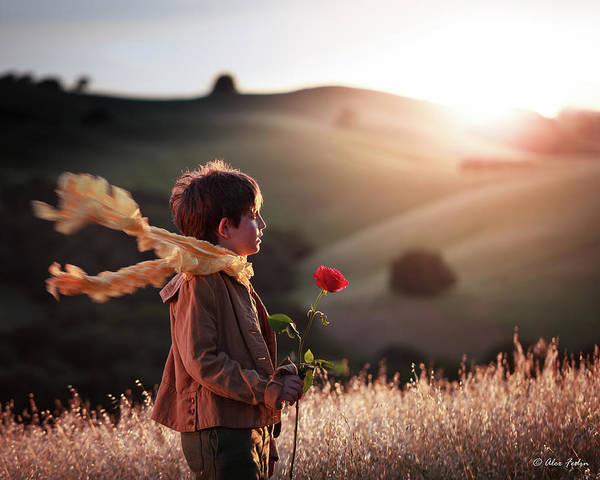 Photograph - Le Petit Prince by Alexander Fedin
