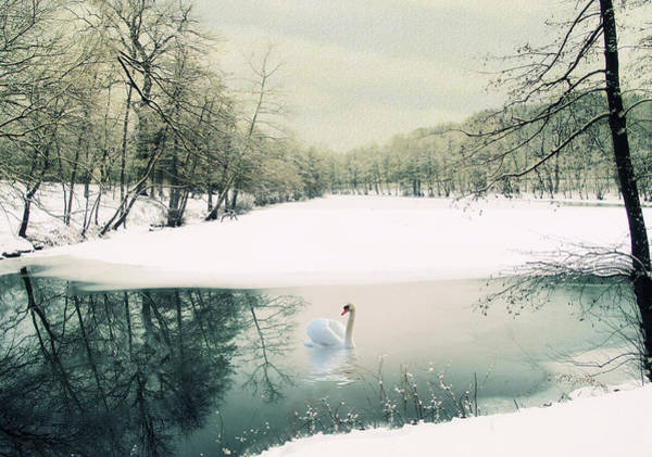 Swan Photograph - Le Reve by Jessica Jenney