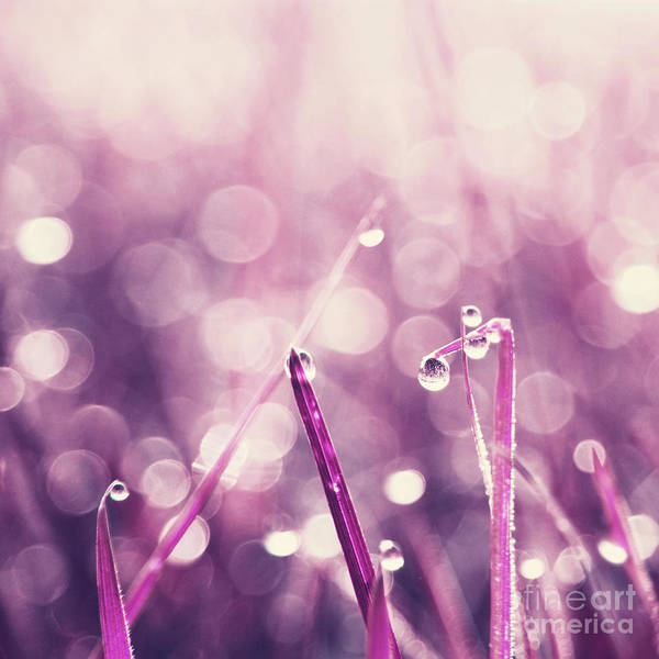 Aimelle Photograph - Le Reveil - S03c2b by Variance Collections
