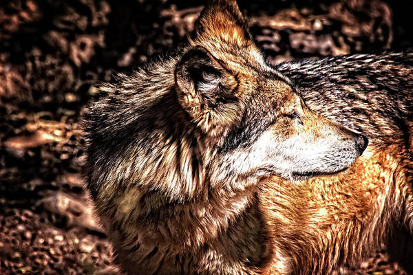 Photograph - Leader Of The Pack by Mike Stephens