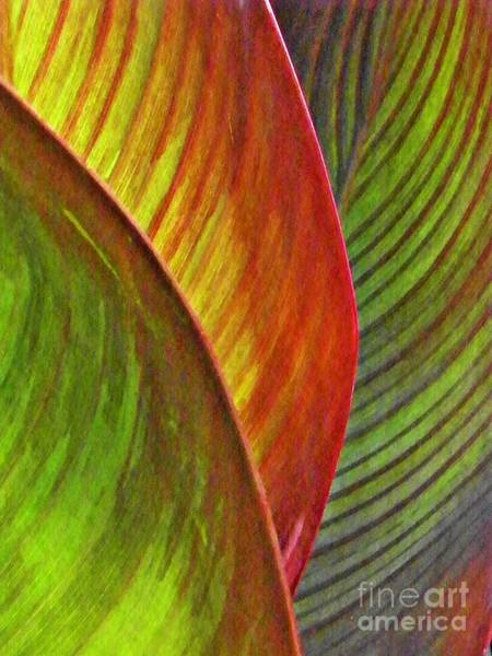 Sarah Photograph - Leaf Abstract 3 by Sarah Loft