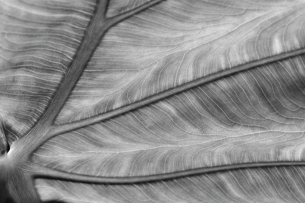 Leaf Abstraction Art Print