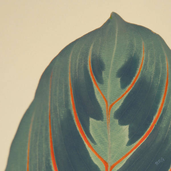 Photograph - Leaf by Ben and Raisa Gertsberg