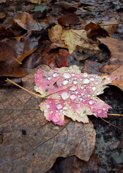 Photograph - Leaf Bling by Kendall McKernon