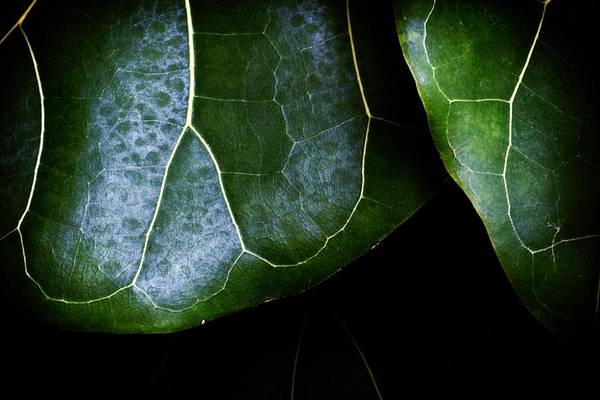 Photograph - Leaf by Christopher Meade