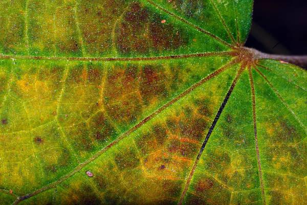 Photograph - Leaf Colors by Larah McElroy