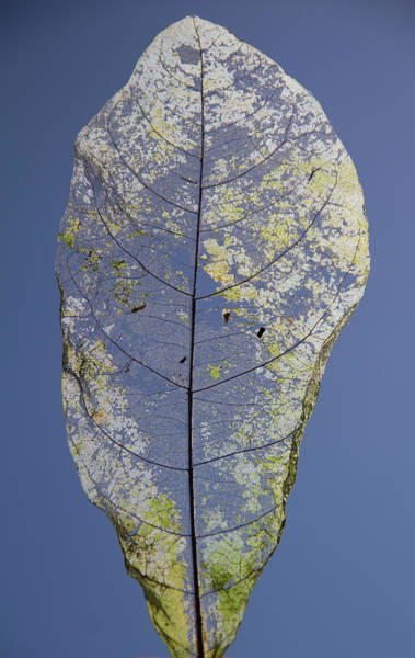Photograph - Leaf by Debbie Cundy